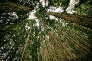 Jak żyć ekologicznie?