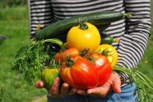 dlaczego warto jeść warzywa, Dlaczego warto jeść warzywa?